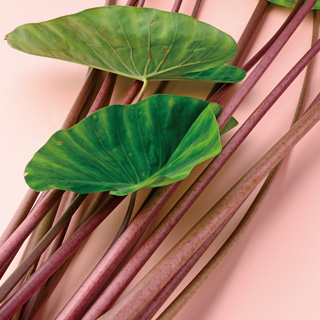 Akazuiki (Red Taro Stems)