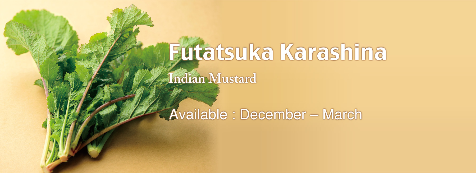 Futatsuka Karashina (Indian Mustard)